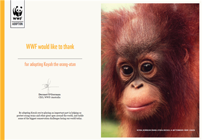 Orangutan Adoption Certificate